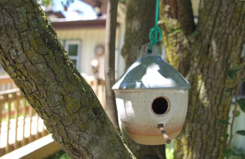Bird Feeder in the Pear Tree